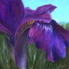 Iris Canopy